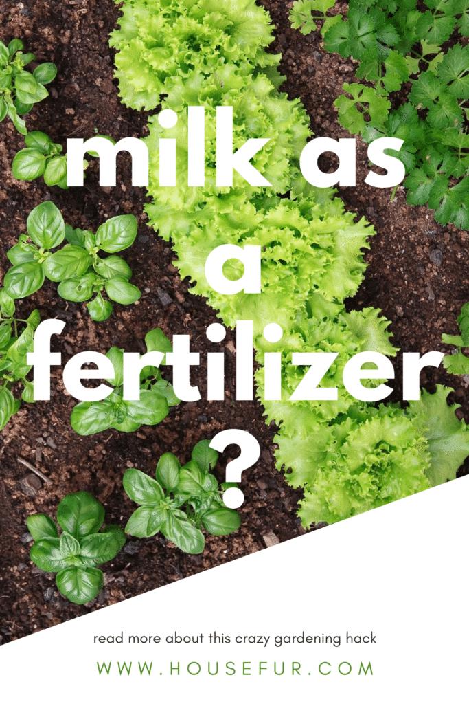 milk as fertilizer