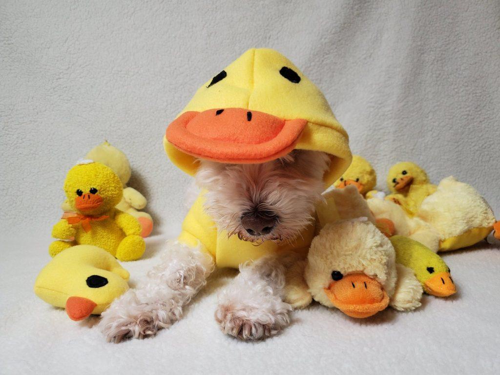 duck dog costume
