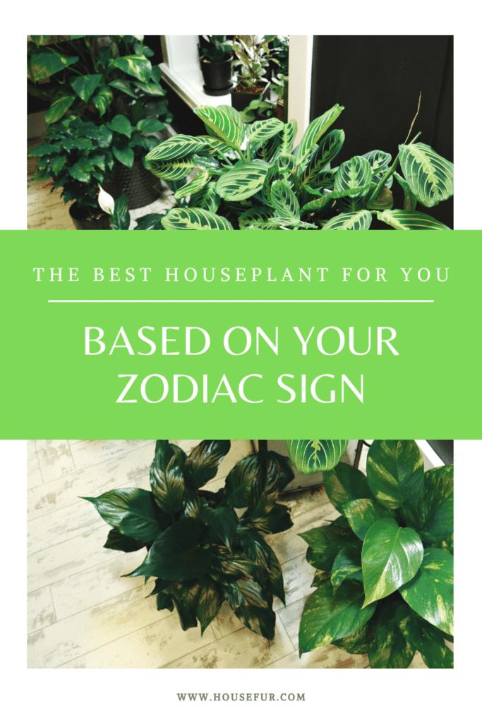 zodiac houseplant
