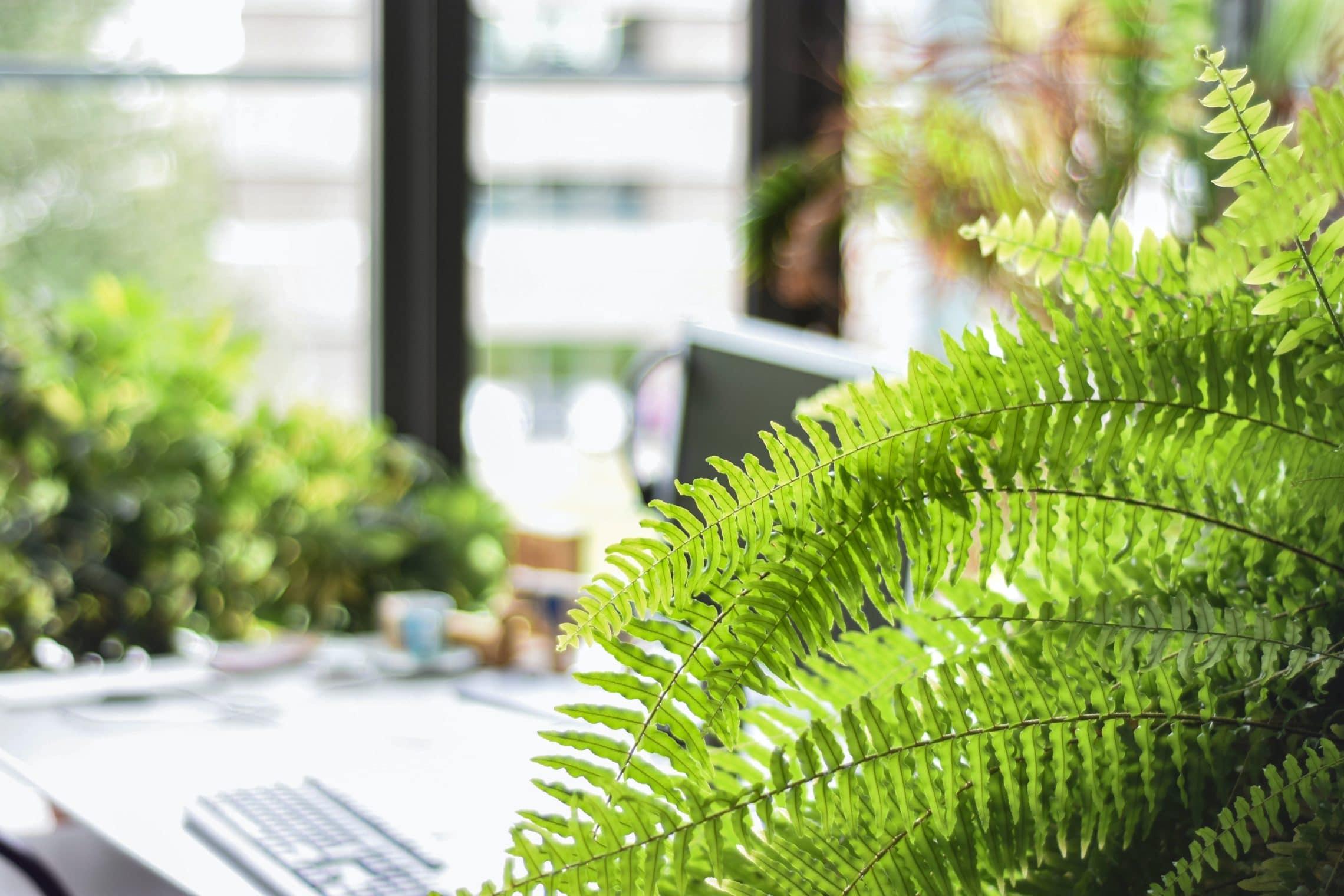 fern houseplants