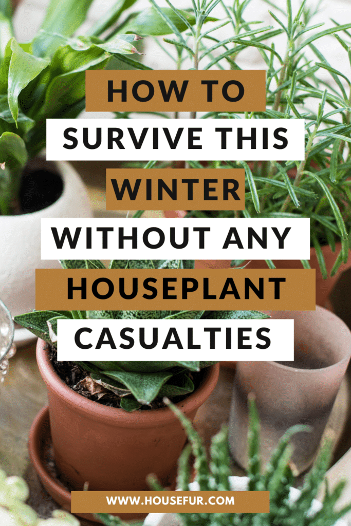 Don't Kill Your Houseplants this Winter: Winter Houseplant Care Tips