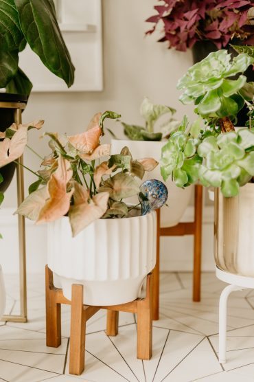 plant water globes