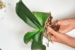 How do you treat root rot in house plants?