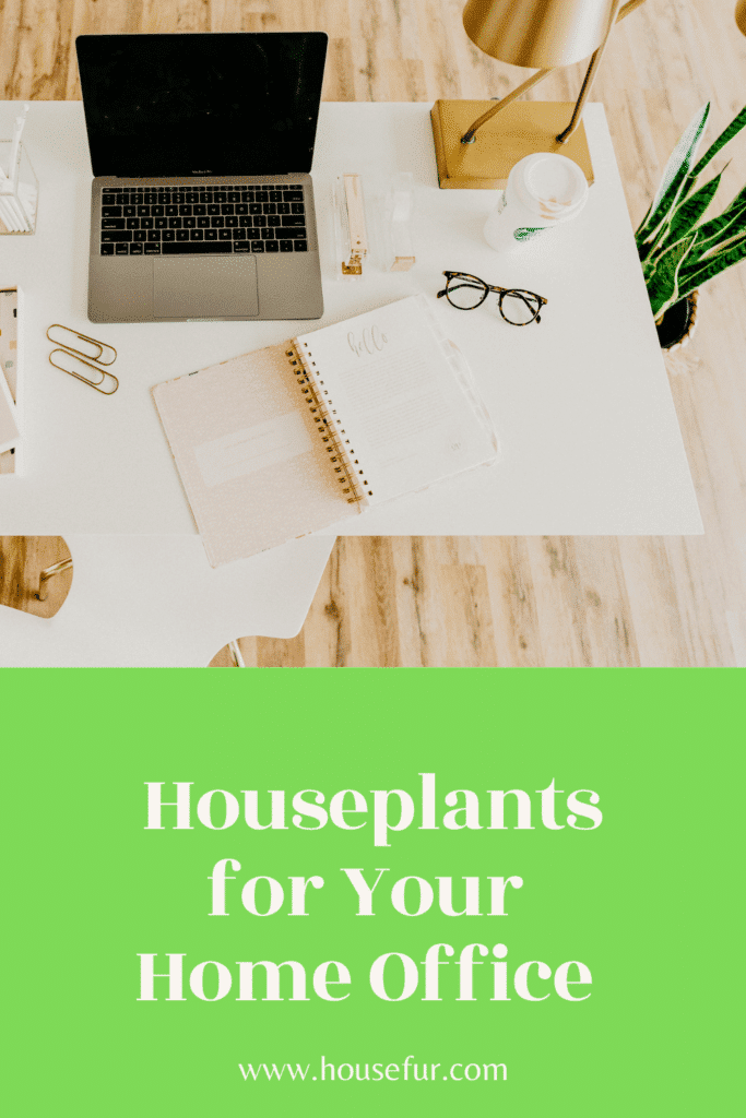 houseplants for home office