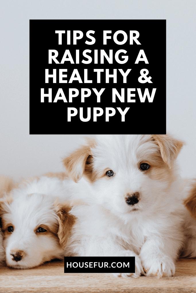 raising puppy tips