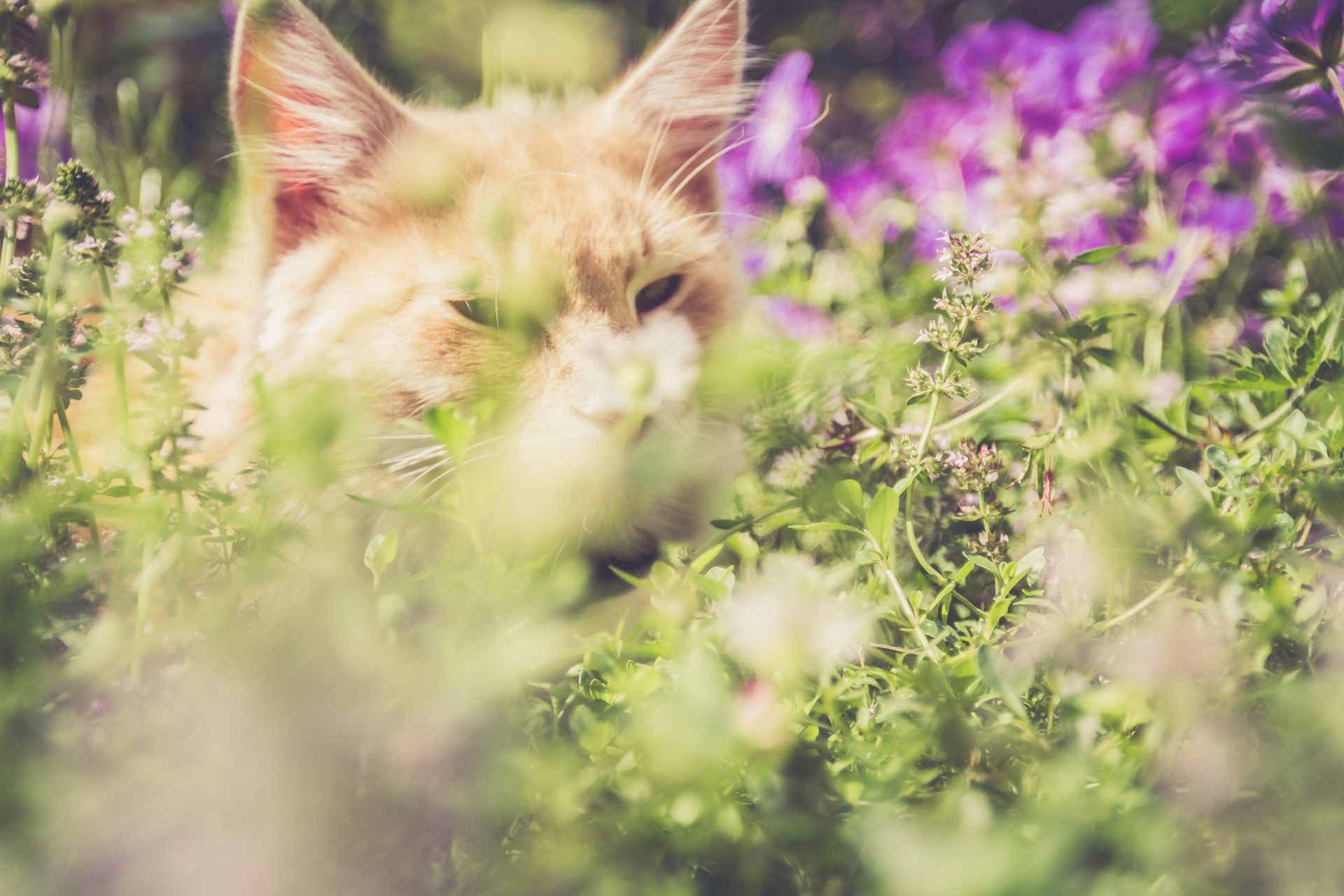 orchids safe for cats