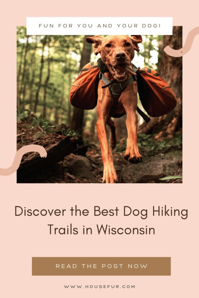 Dog friendly hiking trails in Wisconsin