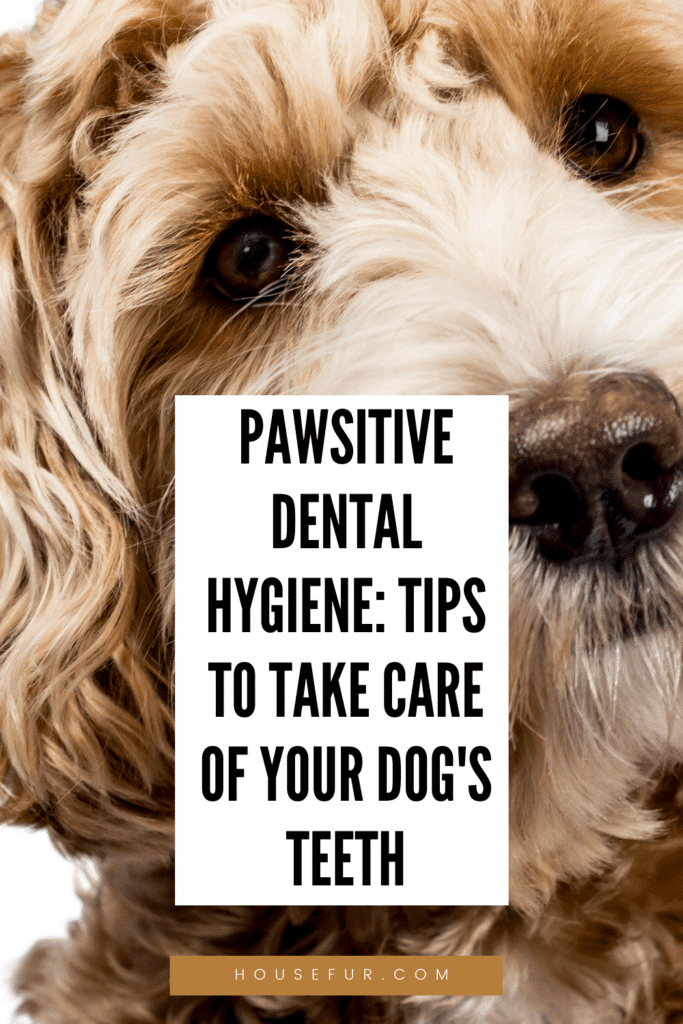 take care of your dogs teeth