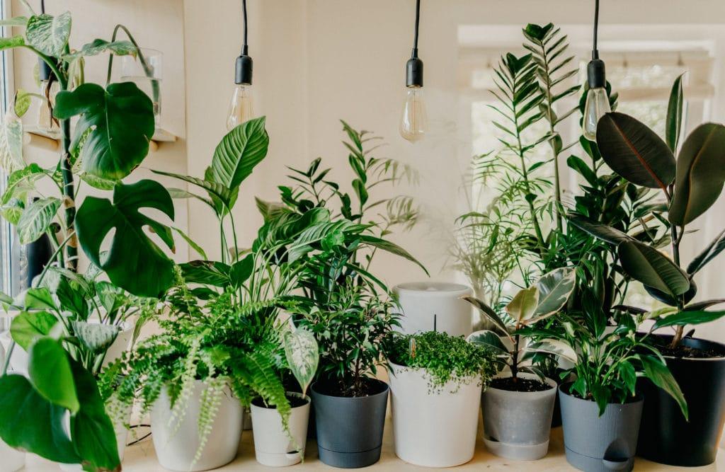 etsy houseplant were to buy
