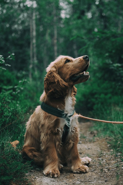 wisconsin dog hikes