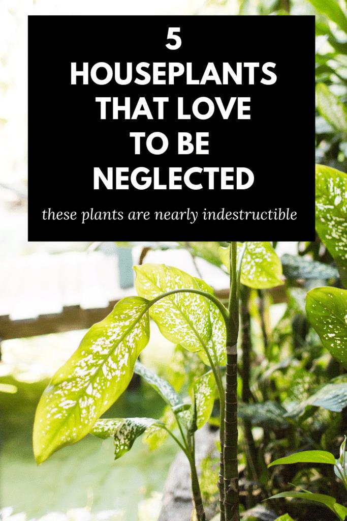 houseplants hard to kill