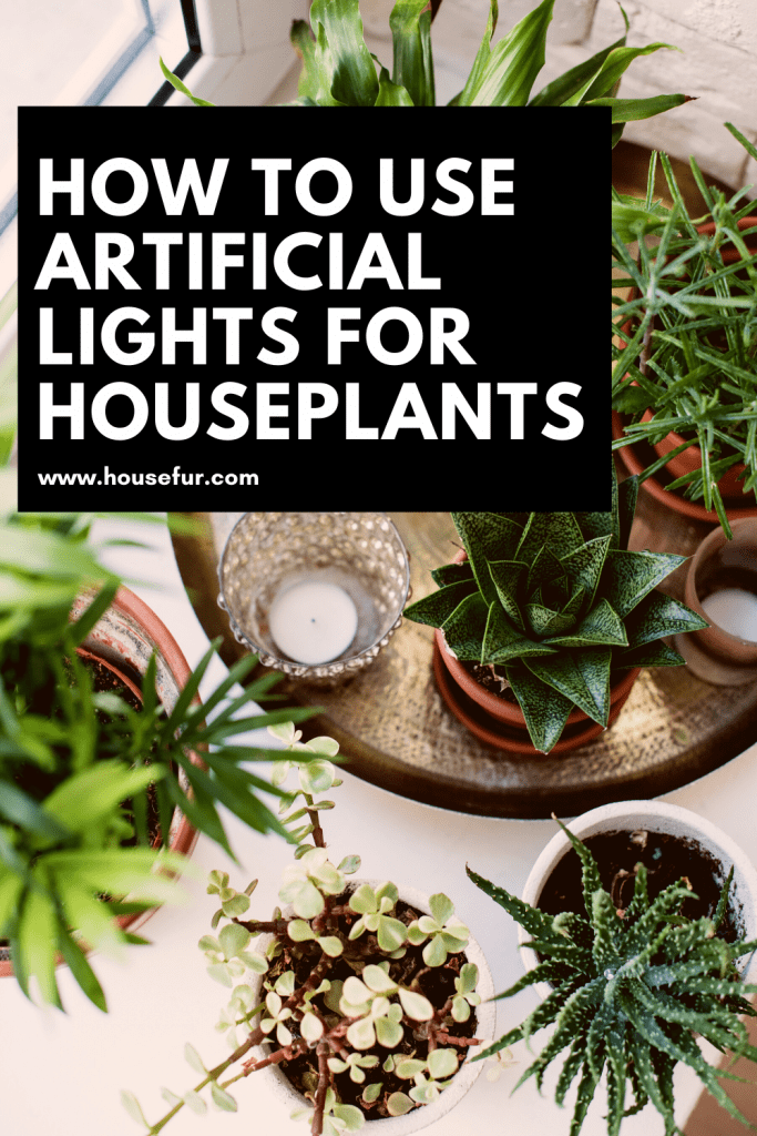 houseplants and artificial light