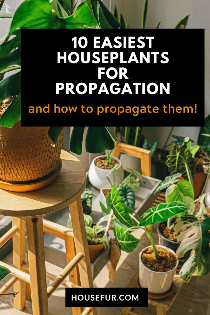 Propagate houseplants