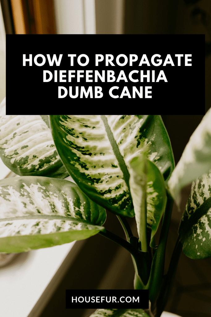 Propagate Dieffenbachia in water Pinterest