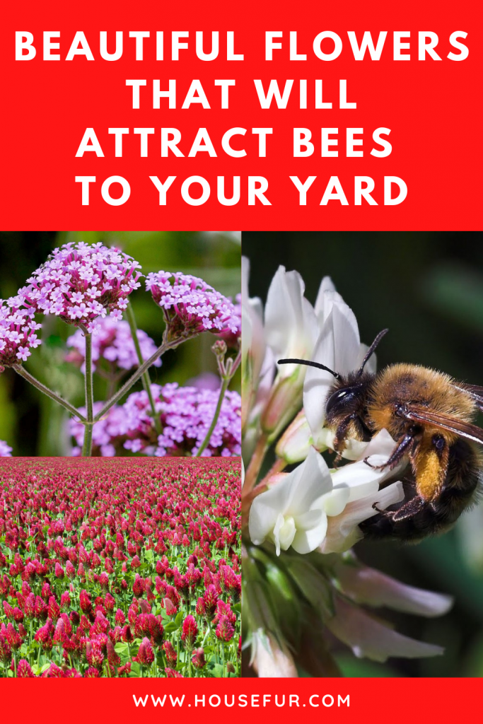 flowers-attract-bees