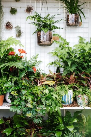 houseplants outdoors