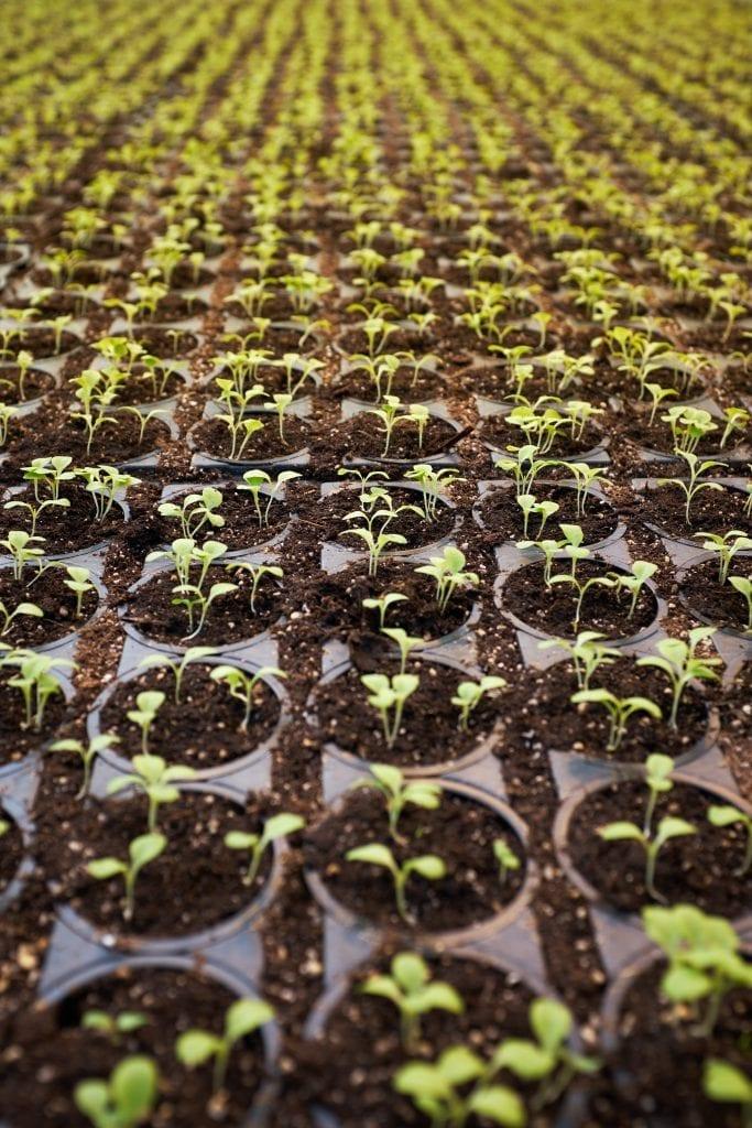 start garden seeds