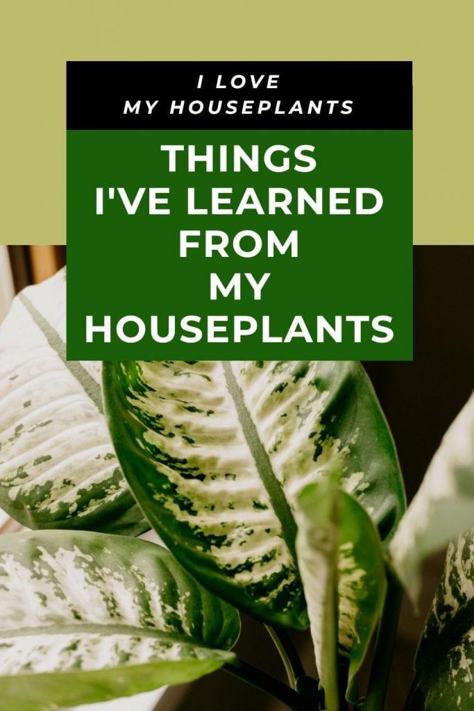 learn from houseplants