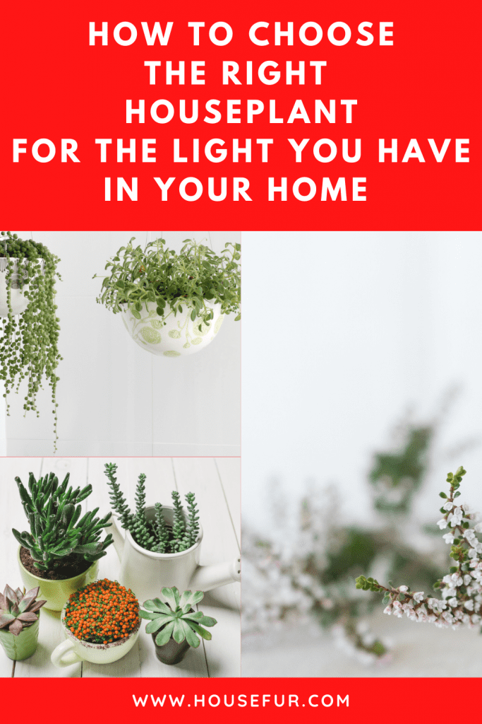 choose the right houseplant