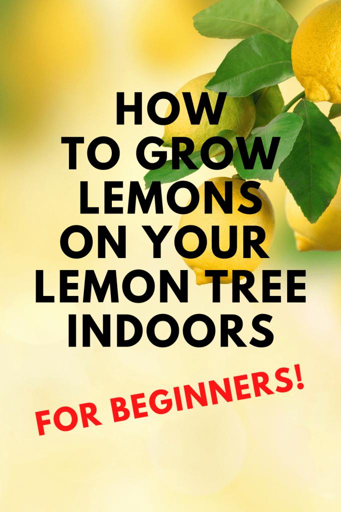 how to grow lemons on my lemon tree