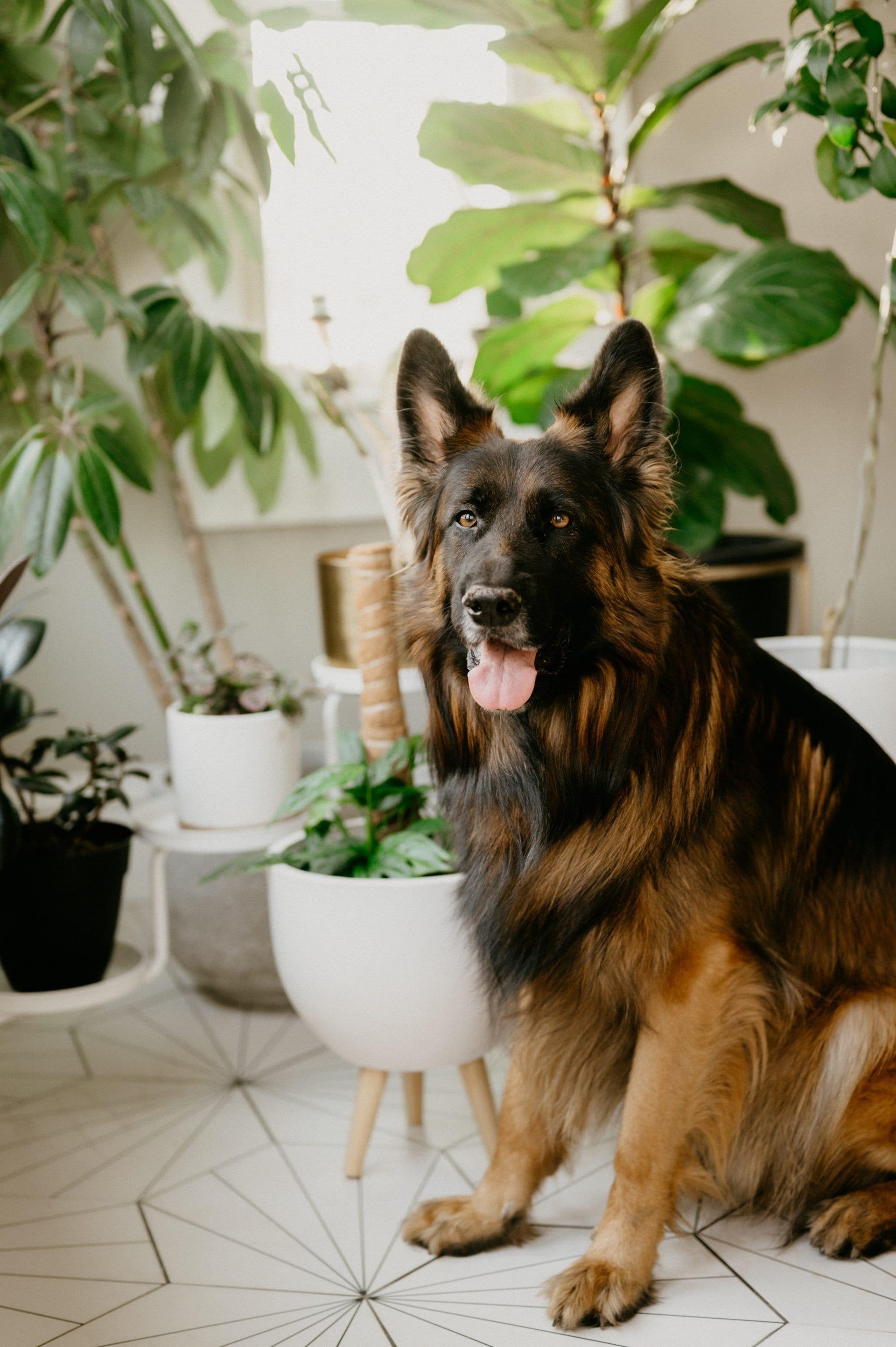 dog and houseplants