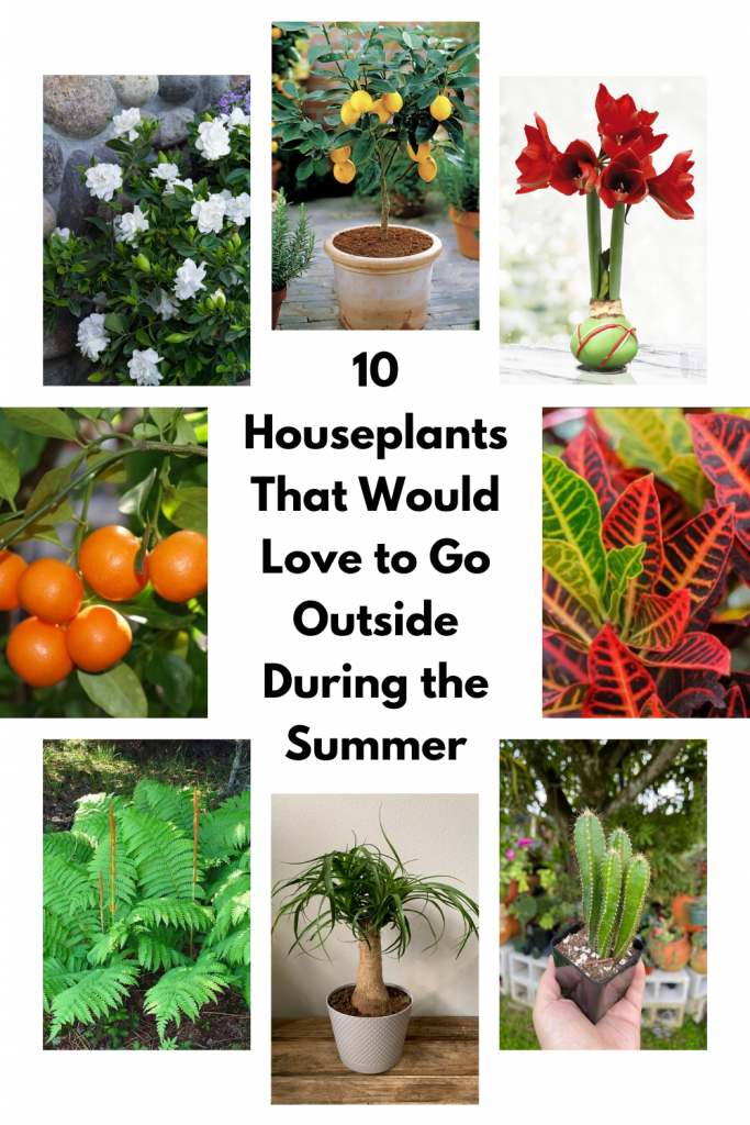 10 Houseplants That Would Love to Go Outside During the Summer
