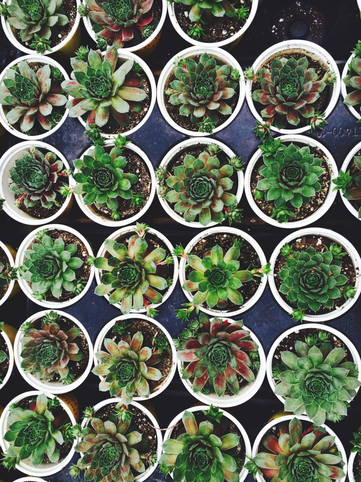 care for succulents