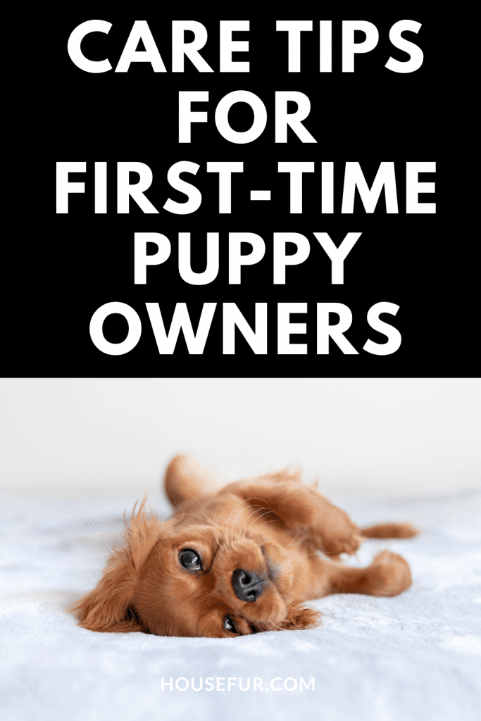 first time dog owner
