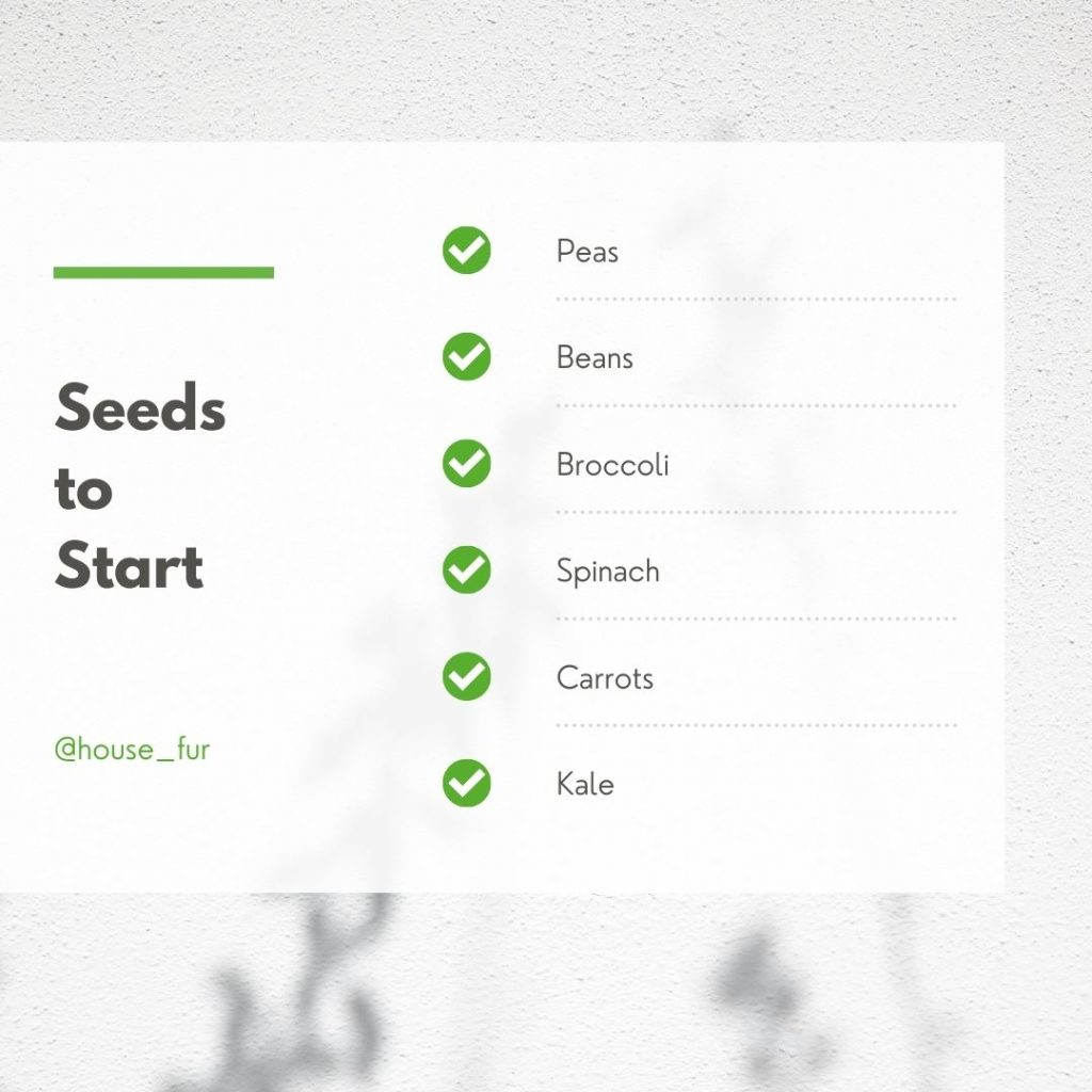 fall seeds to start