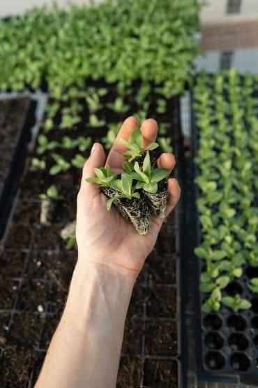 garden seedlings