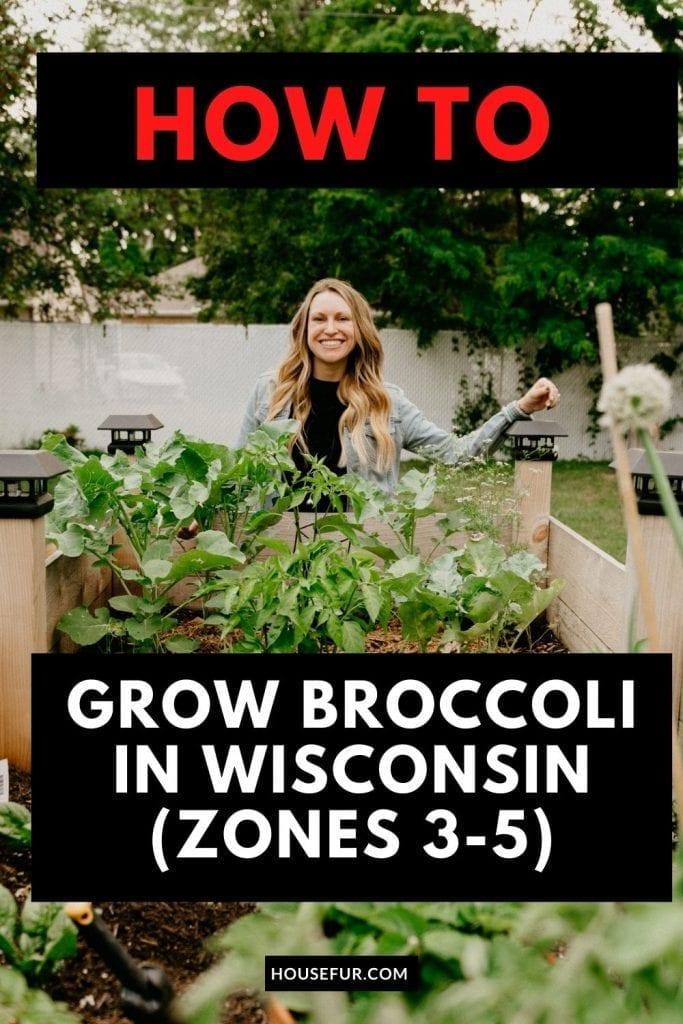 grow-Broccoli-wisconsin