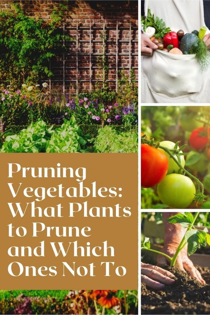 prune-vegetable-plants