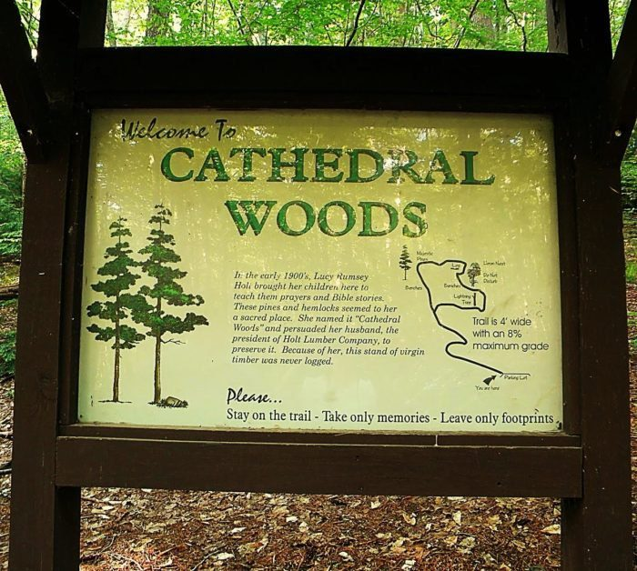 cathedral woods wisconsin