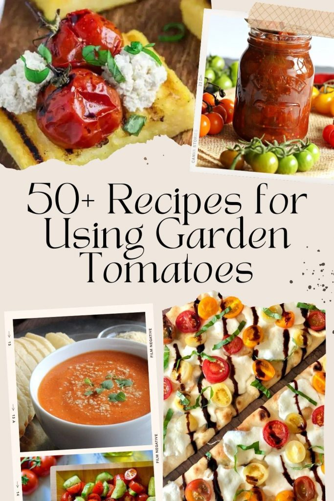 recipes for tomatoes