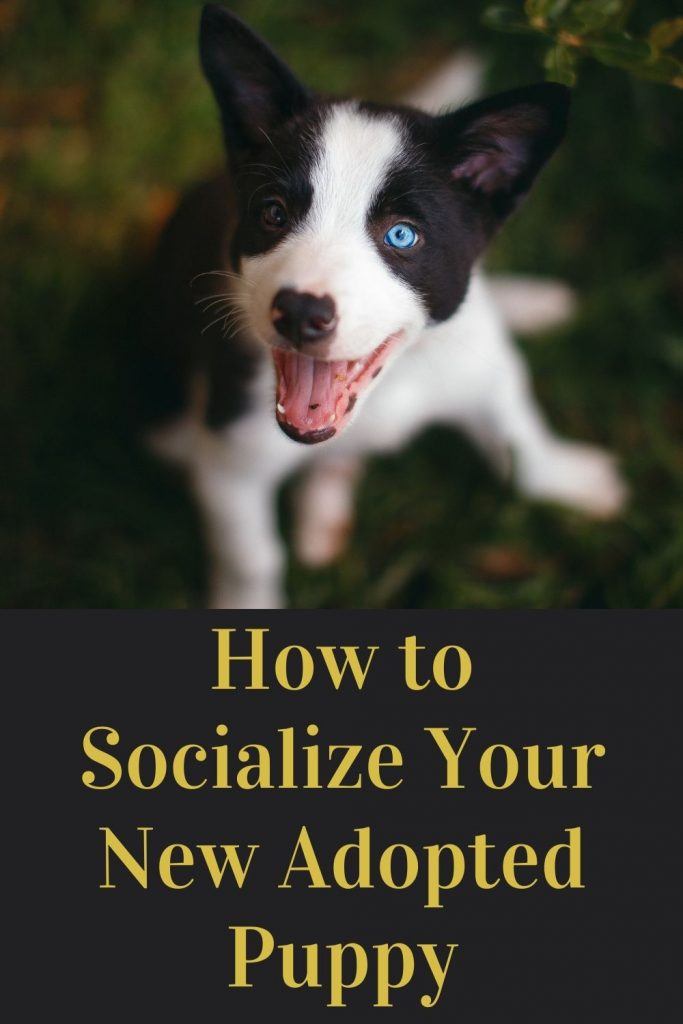socialize your new puppy