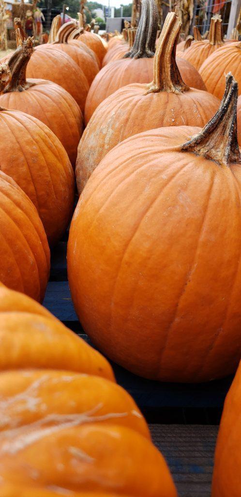 growing pumpkins in wisconsin