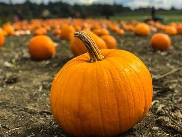 pumpkins in wisconsin